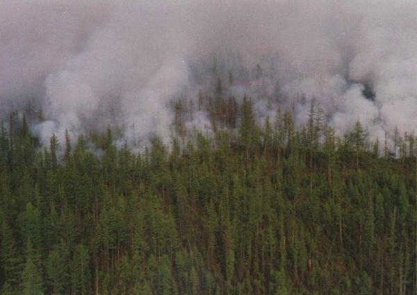 За сутки количество пожаров увеличилось на три очага