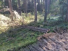 На Окружном шоссе ведется санкционированная вырубка леса