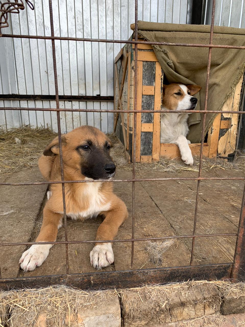 Пункт передержки безнадзорных животных Якутска передан некоммерческой организации «Фонд помощи животным»