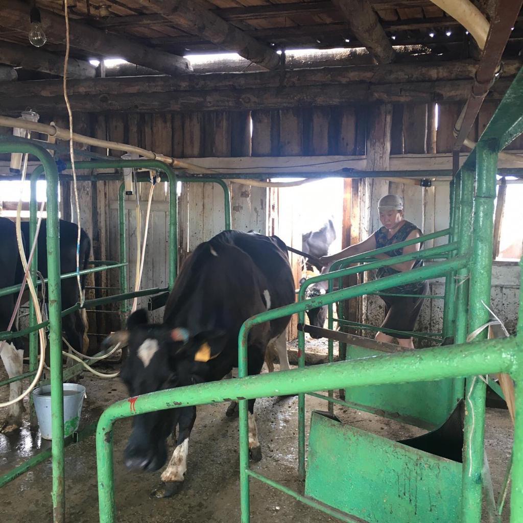 Сельхозпроизводители Якутска продолжают заготовку кормов