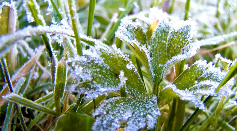 Первые легкие морозы ожидаются в Якутии