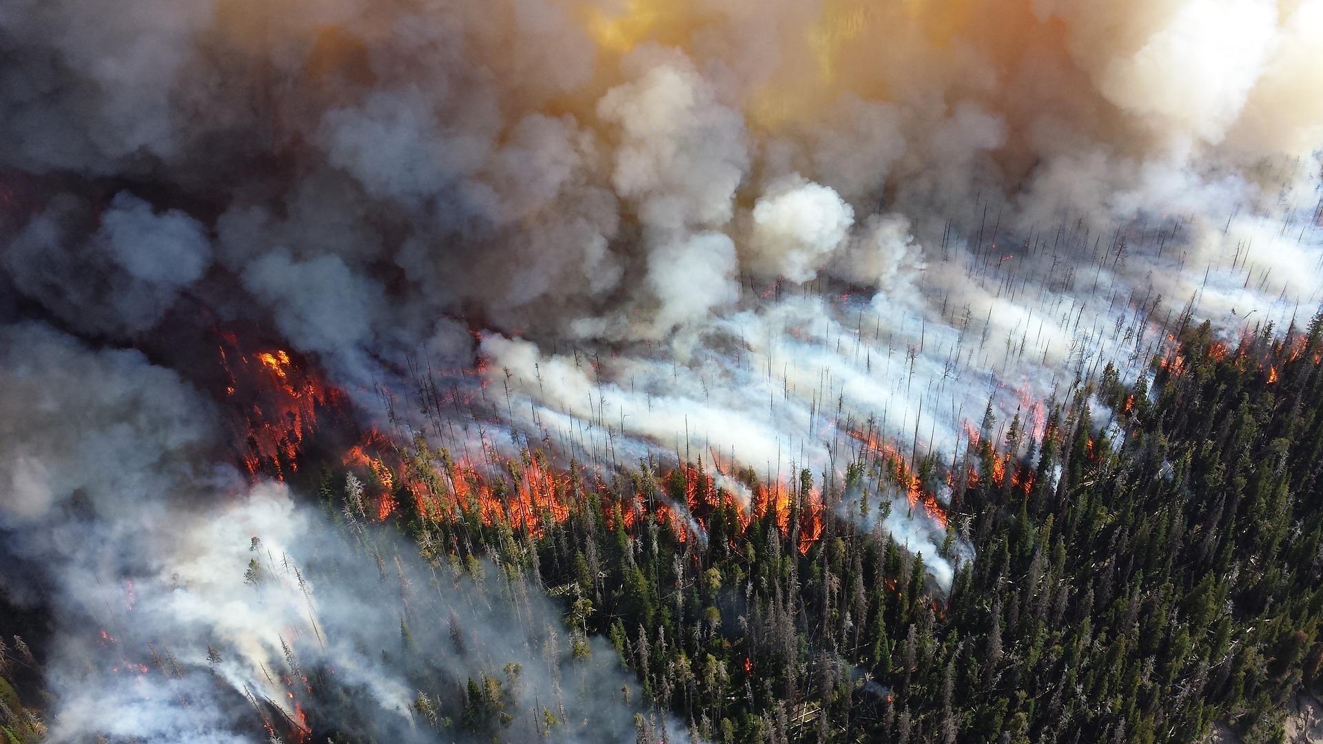 На территории региона действует 49 природных пожаров