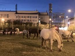 Управление сельского хозяйства Якутска: «Ситуация с безнадзорными лошадьми постепенно налаживается»