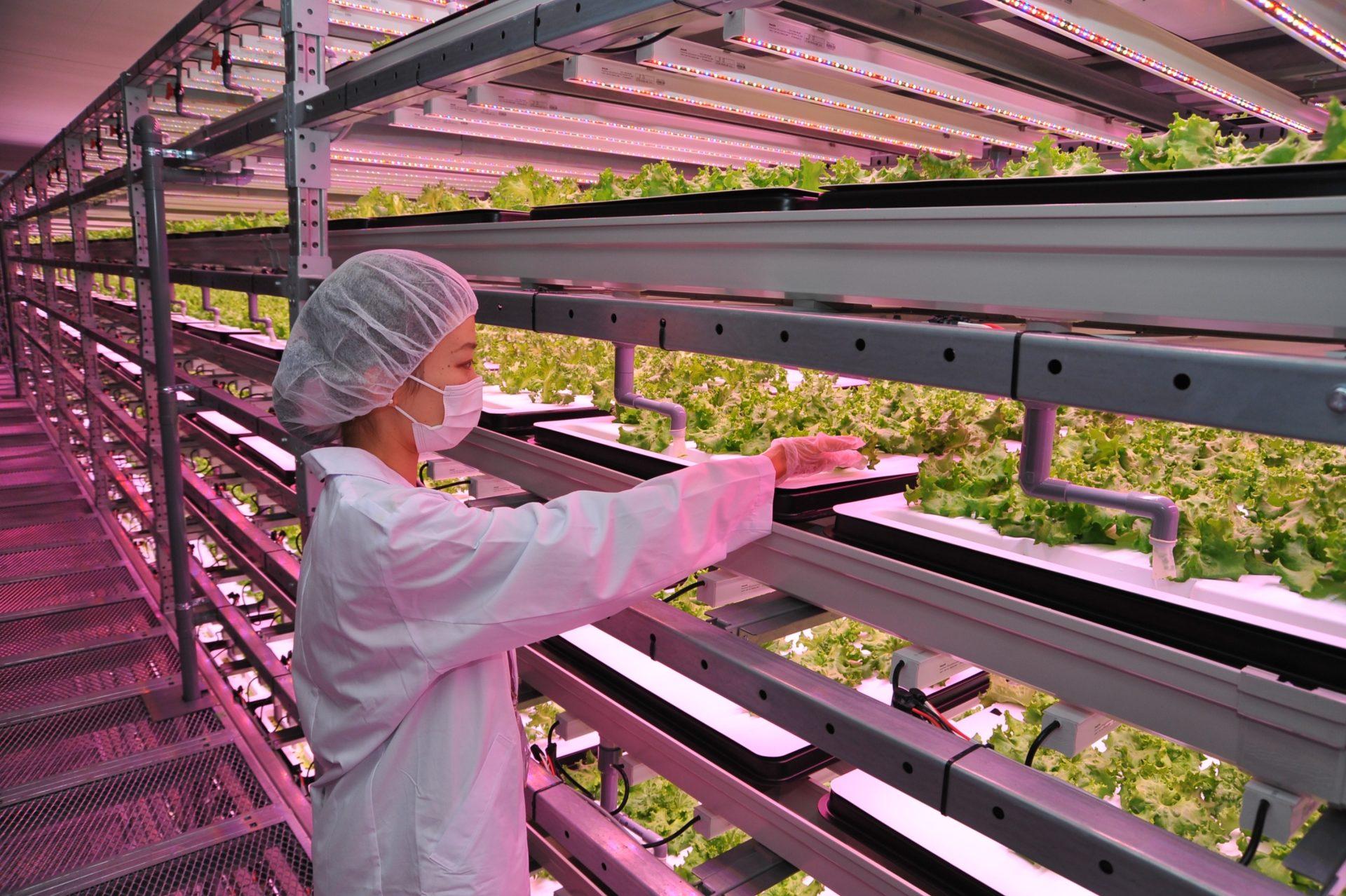В Якутии впервые будут готовить сити-фермеров — ЦОПП Якутии и Якутский сельскохозяйственный техникум запустили курс по Сити-фермерству