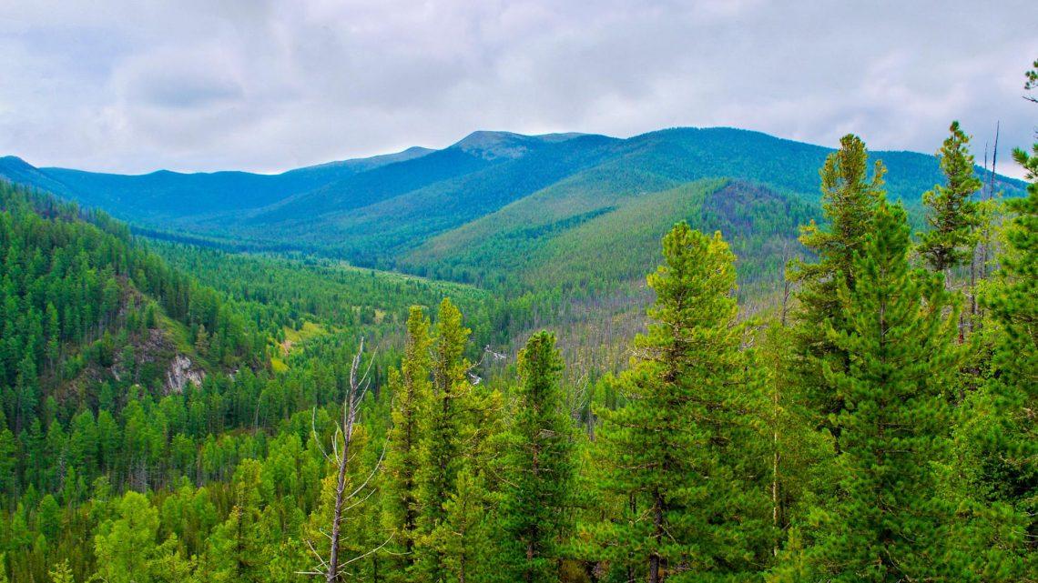 Студенты АГАТУ ведут работу по сохранению и восстановлению леса