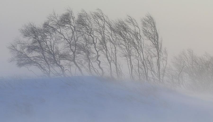 В центральных районах Якутии в ближайшие сутки ожидаются сильные порывы ветра и метель